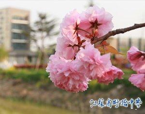 我校一项目获江苏省教学成果二等奖